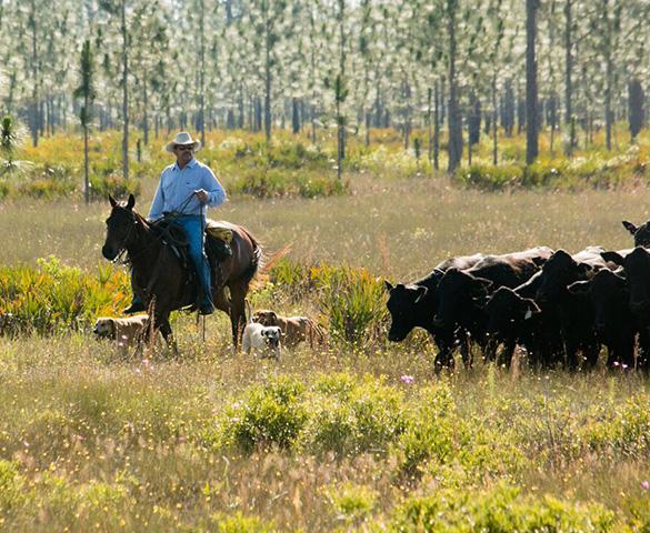 Babcock Ranch Community